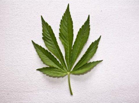 Investice, která dokáže zamotat hlavu – marihuana