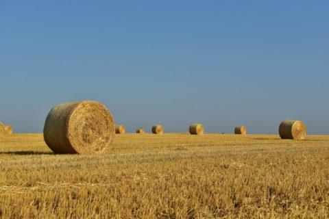 Zemědělská půda: další zdražování nebo naopak pokles cen?