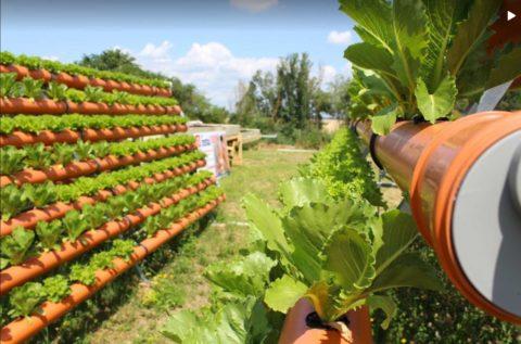 Dluhopisy na Future Farming?