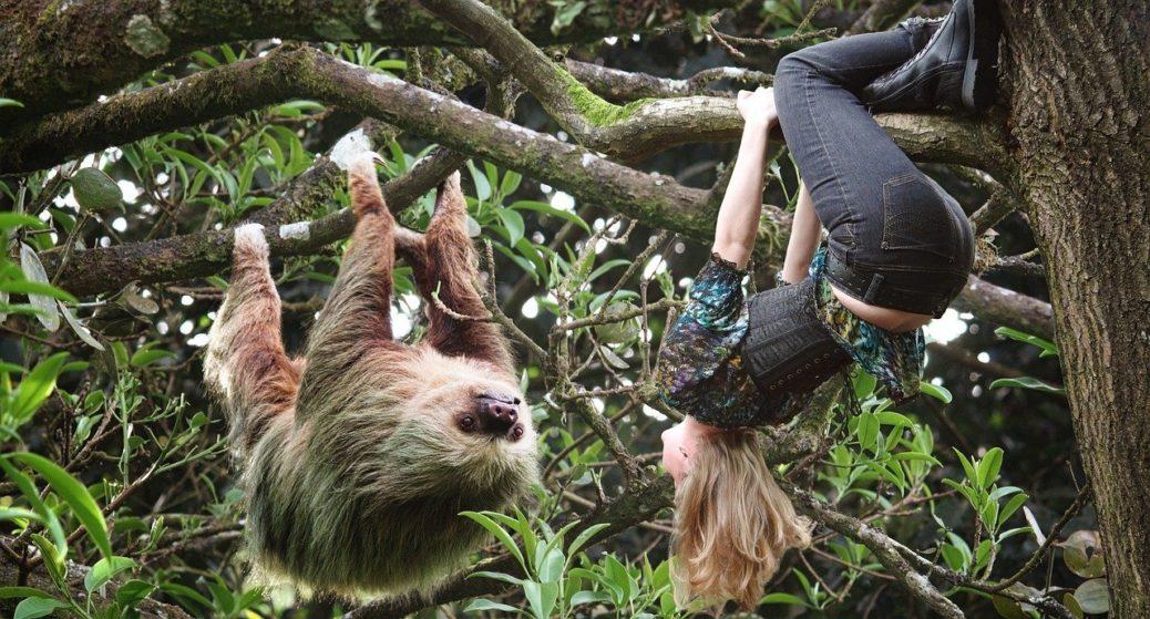 Lenochod na větvy s dívkou